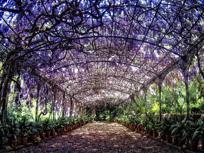 Ботанический сад Малаги