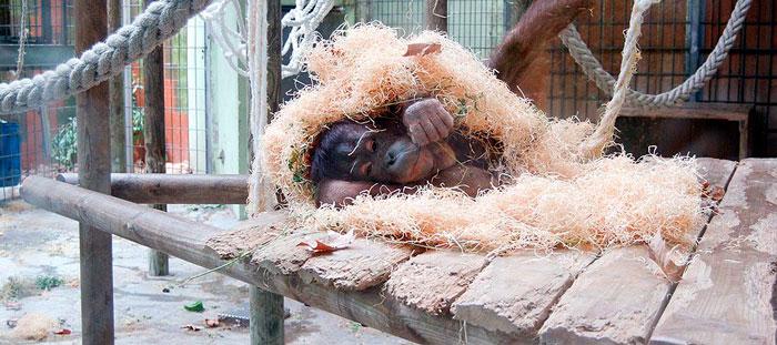 приматы зоопарк Барселоны